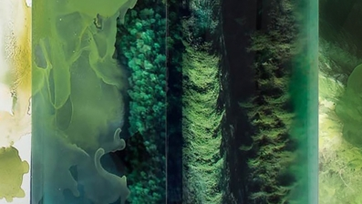 janet_laurence_avalanche_-_conversations_with_plants_in_the_tarkine_2012_duraclear_on_acrylic_dominik_mersch_gallery.jpg