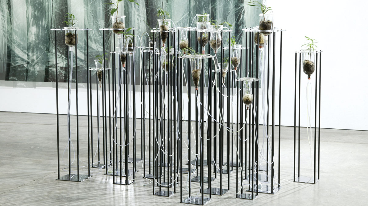 Janet Laurence, Cellular Gardens, 2005, stainless steel, mild steel, acrylic, blown glass, rainforest plants, dimensions variable. Courtesy: The artist and Sherman Galleries.
