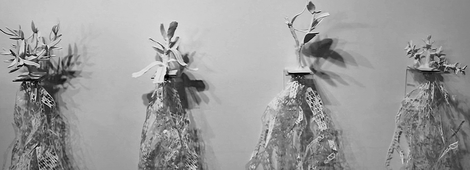 Kate Dunn and Graham Clarkson, Pattern Symbiosis, from video still, 2013