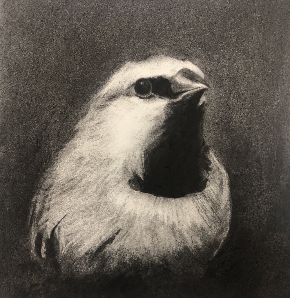 The Black Finch Project was designed to contain no messages of rage - 'just dead finches'. Linda Studenta